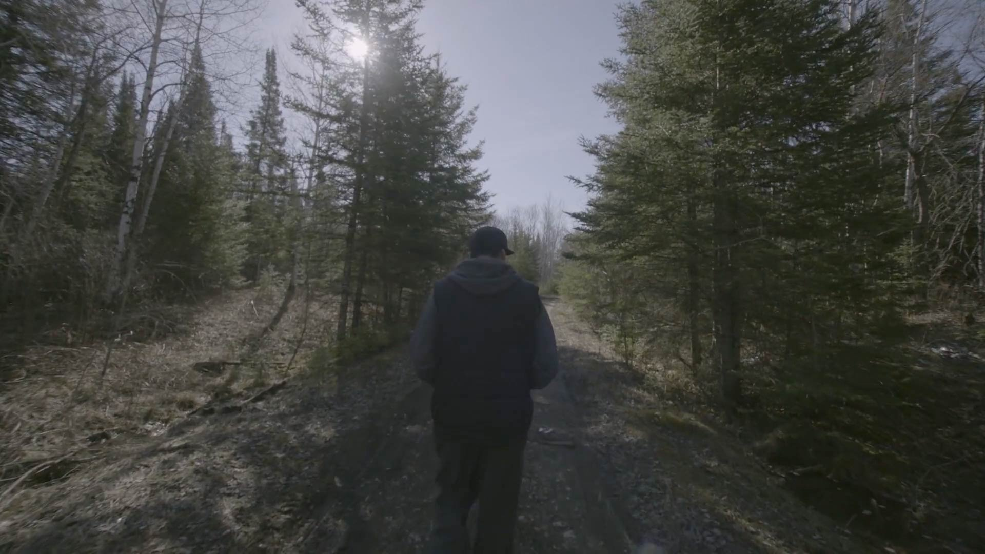 An image of a man walking in a forest with pine trees.